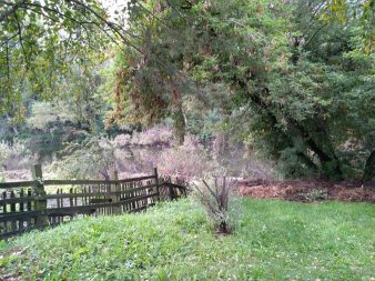 maria-backyard-676x507